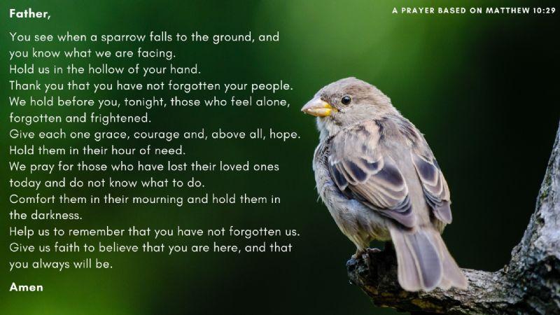 WHen a Sparrow Falls +