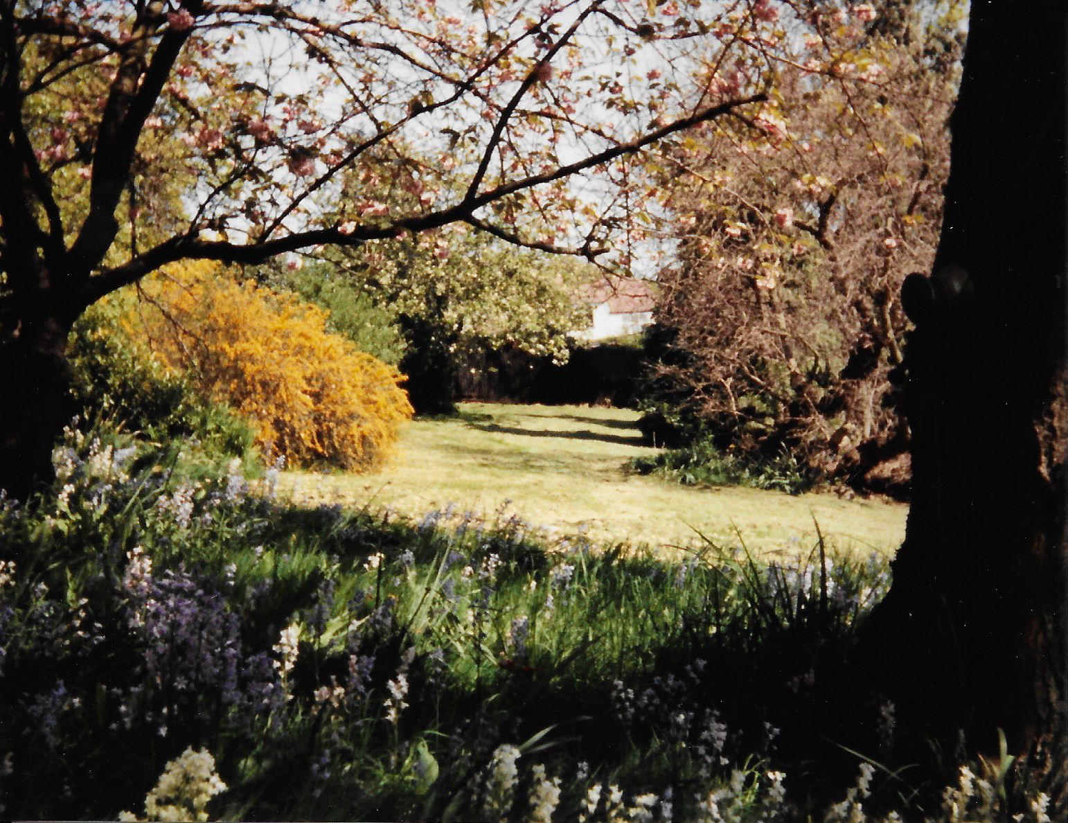 A variety of trees and bushes, a lawn in the middle and flowers in the foreground