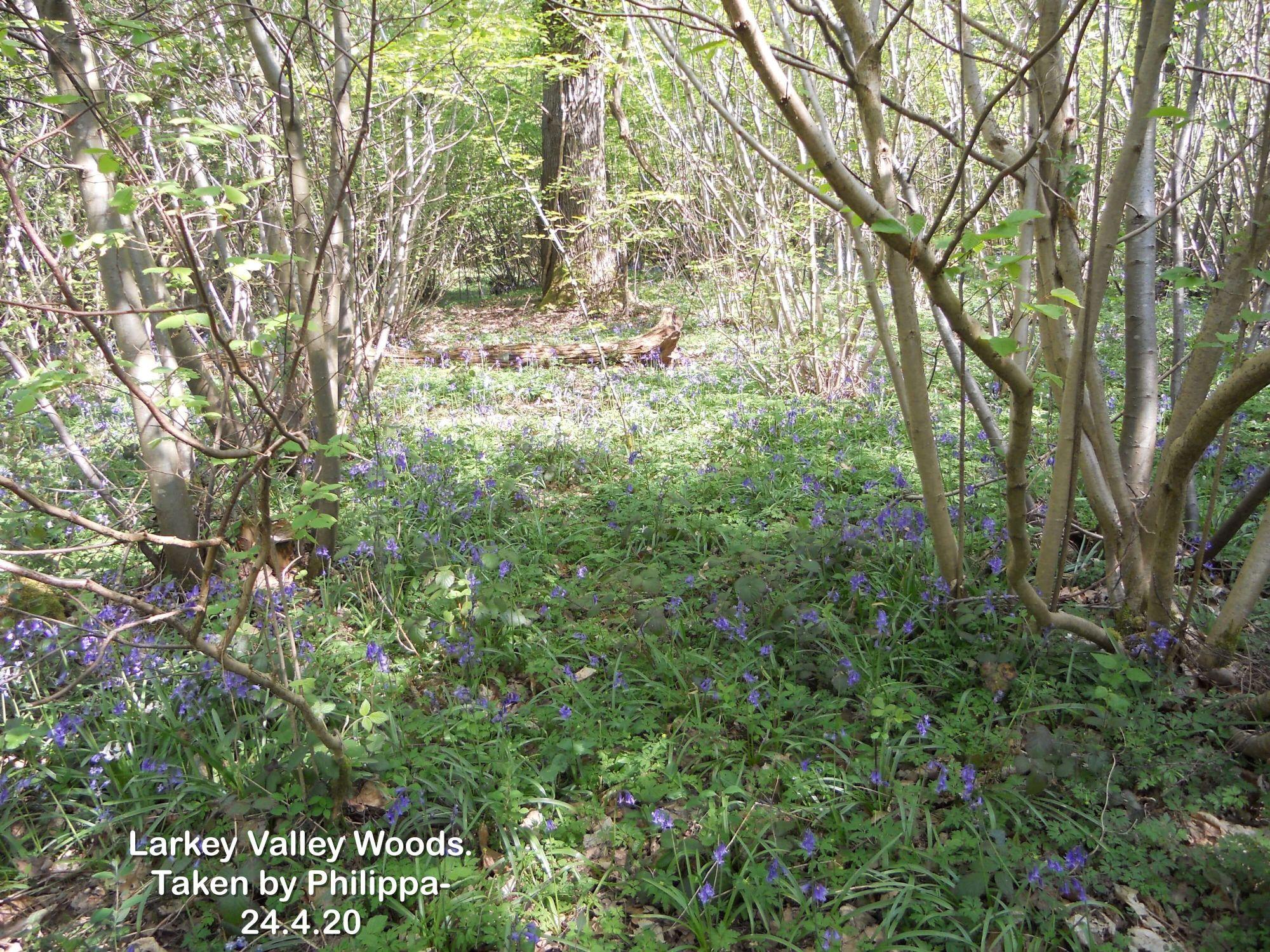 Larkey Valley Woods.