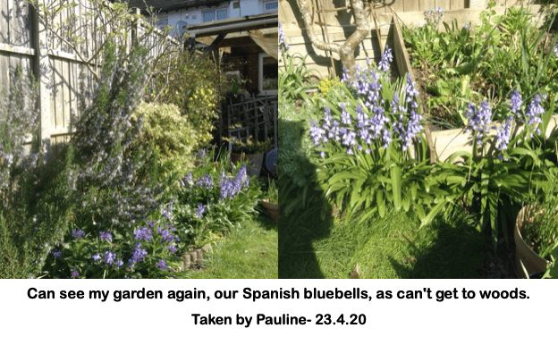 Can see my garden again, our Spanish bluebells, as can't get to woods.