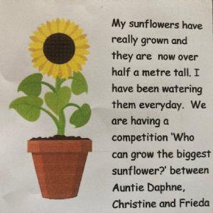 Bens Sun Flower