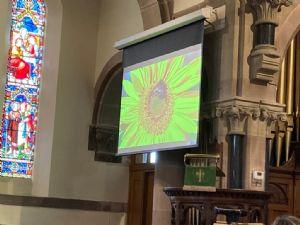 Video of Sunflower