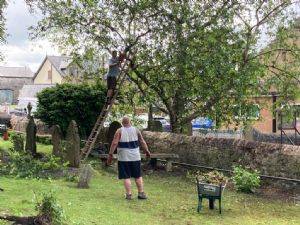 Pruning overhanging branches
