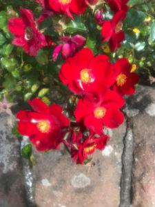 Flowers M2