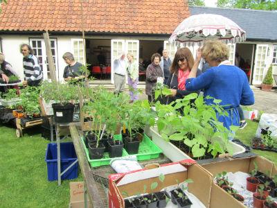 Plant sale 4