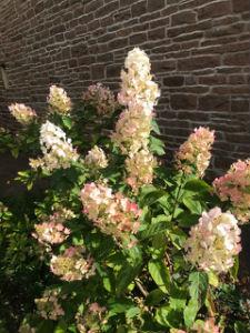 Flowers M1