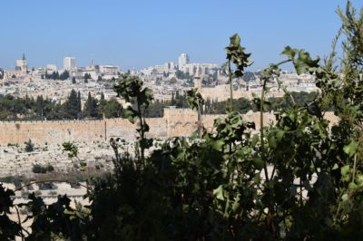 Looking at the Old City (Jerusalem) from the Mount of Olives