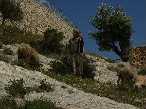 Shepherd (Nazareth Village)