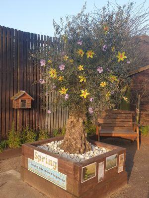 emmuanuel tree