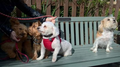 Blessing of our Pets in garden after mass Sunday Oct 7th 2018