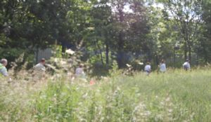 Trekking thro the grass