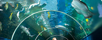 underwater tunnel at Oceanarium