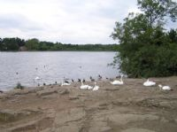 Groby Pool 2