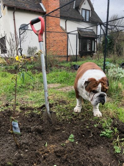 Bertie and Jess planted a wild cherry tree
