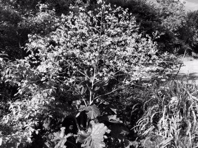 The Berendts' Garden