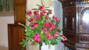 Poppies at Remembrance