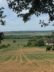 Looking towards the River Crouch