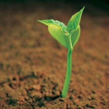A picture of a seed sprouting into new life