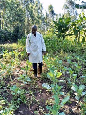 Julius farming