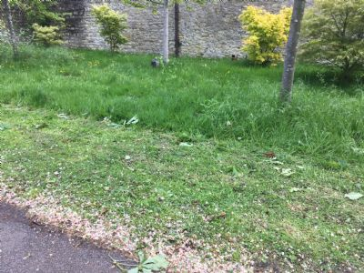 A mown verge and a wild interior, Cutteslowe Park