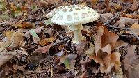fungi2107a