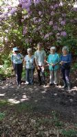 Rhododendron walk