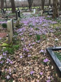 Churchyard pictures