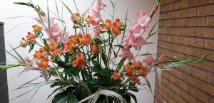 Altar flowers August 2019