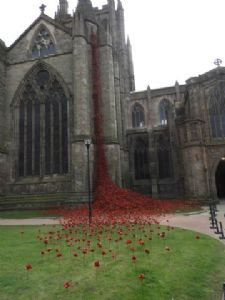 Another view of the Poppies